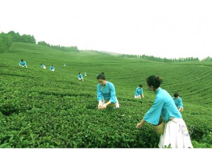 长沙茶艺师培训教材