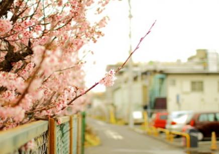 扬州樱花日语课程价格