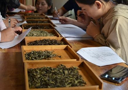 广州乐茶评茶培训学校
