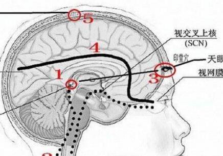 深圳大脑潜能学习班
