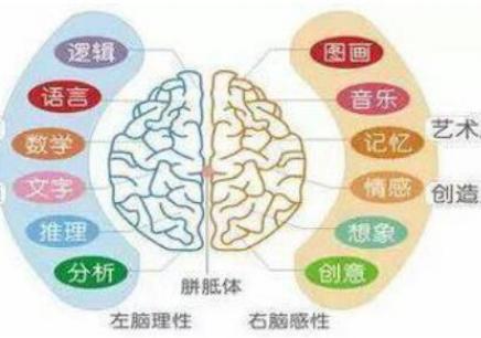 深圳福田大脑开通培训班
