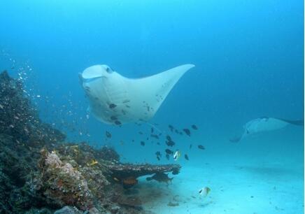 珠海初二生物辅导