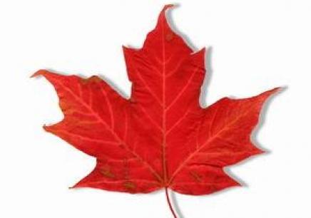 加拿大留学商科