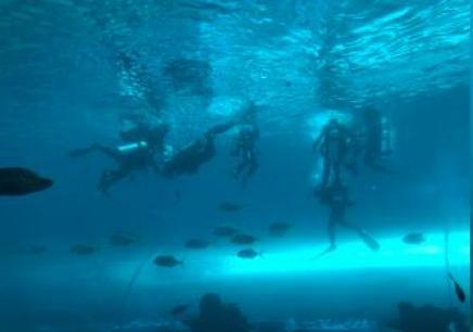 2019探索海底世界三亚潜水营