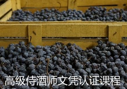 高级侍酒师/品酒师文凭认证课程