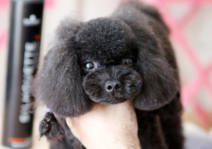 南京宠物美容商业培训班