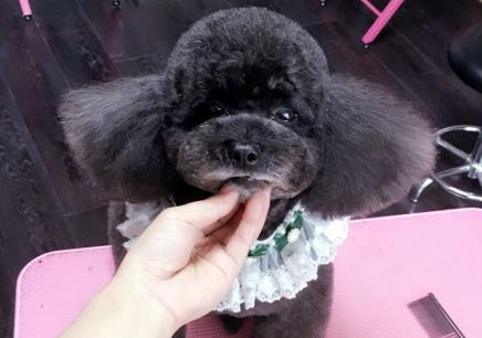 南京提高宠物美容培训班