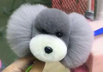 南京宠物美容培训课程