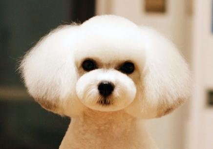 南京宠物美容速成班