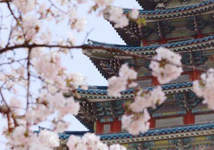 韩国延世大学MBA双证班