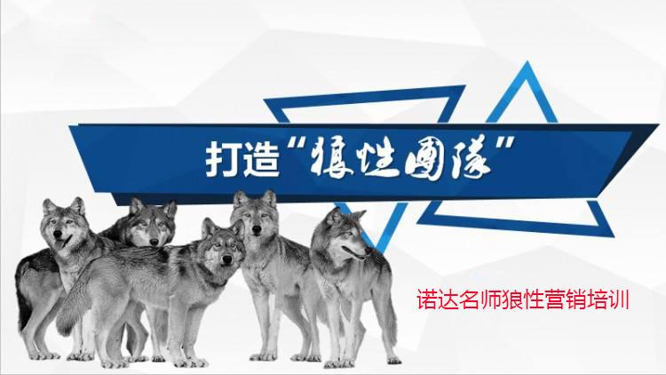 深圳狼性团队企业内训培训哪家好?