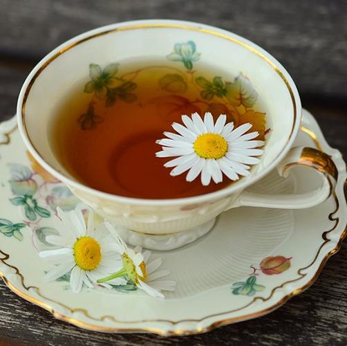 茶艺师培训